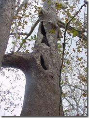 blog-12-4-04-tree